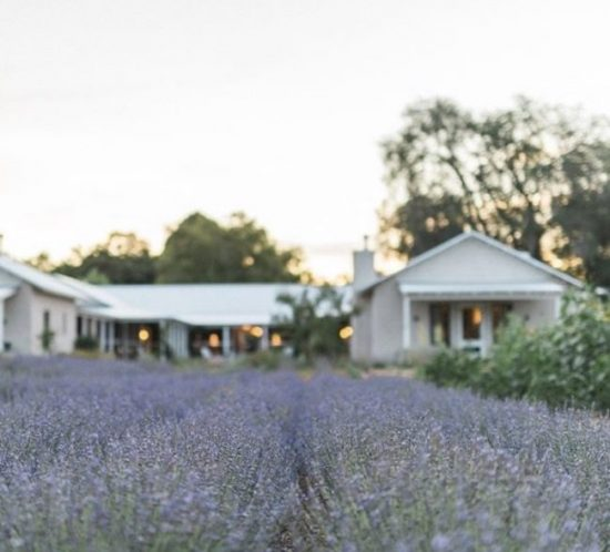 lob poblanos lavender farm field and and hotel building