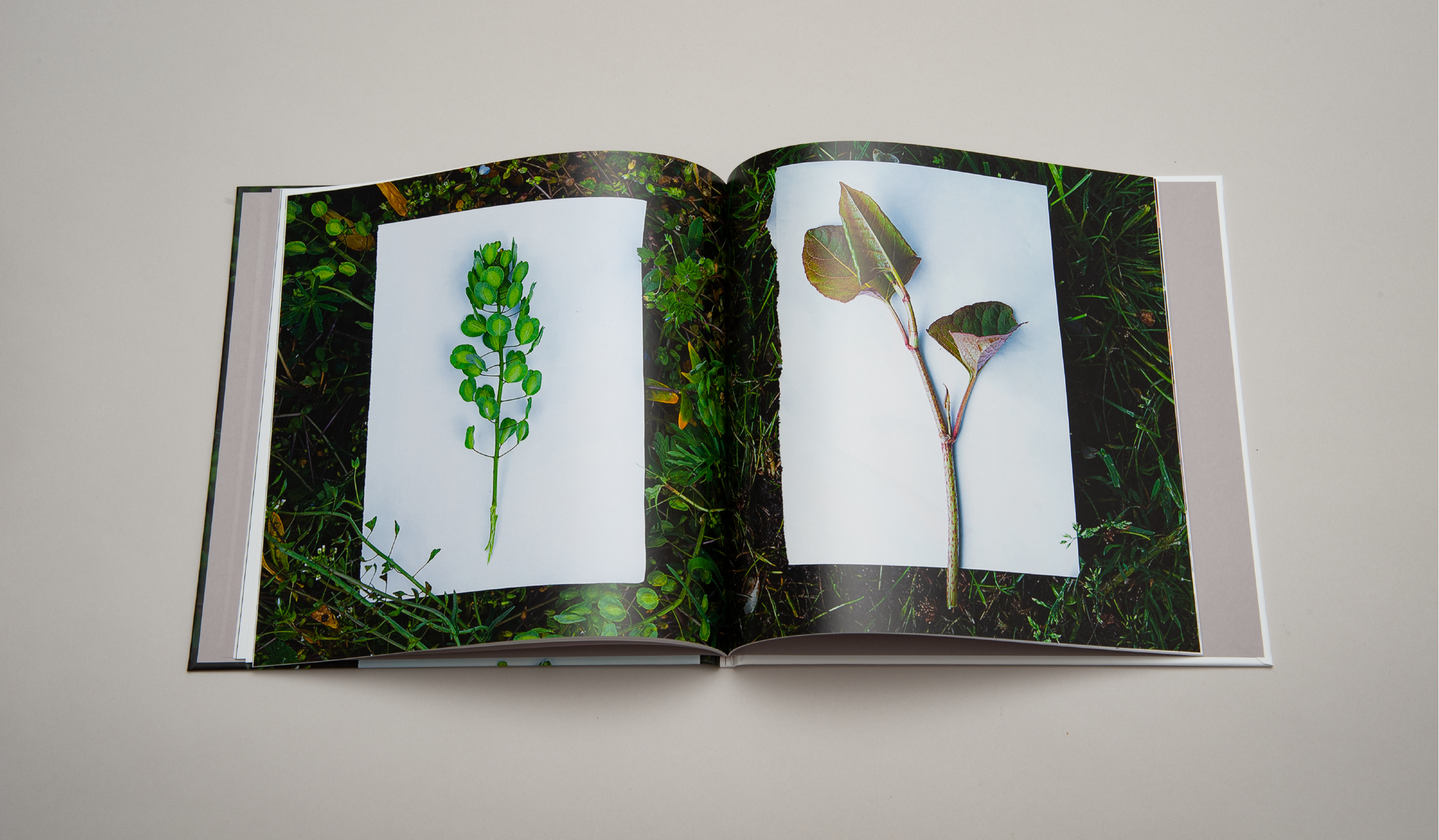 brand guidelines book for herbal cafe photography style